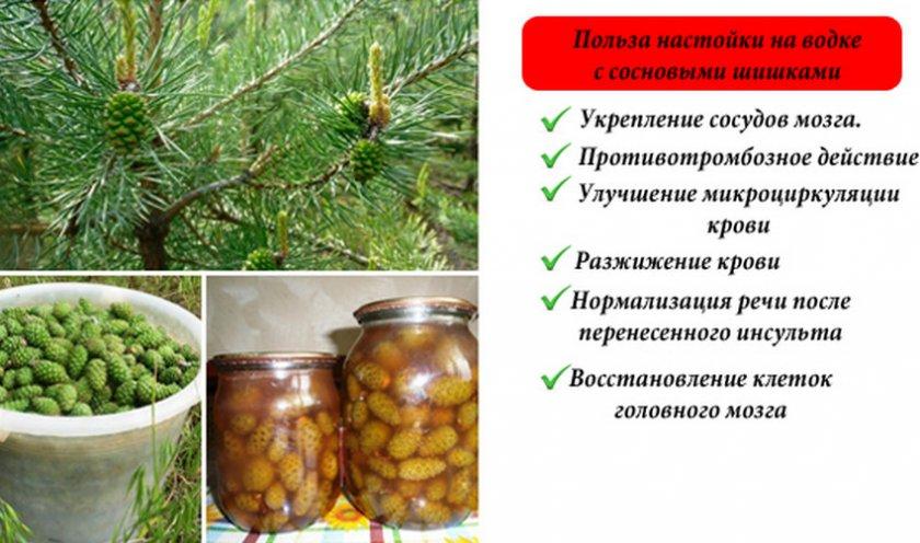Польза настойки сосновых шишек на водке