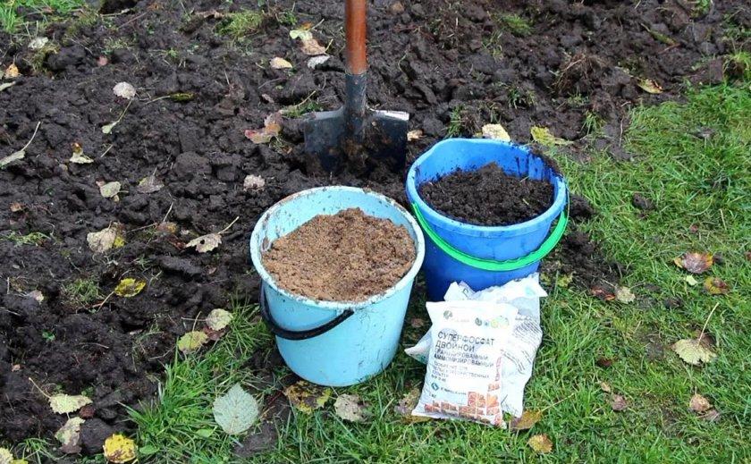 Удобрение грунта для посадки туи
