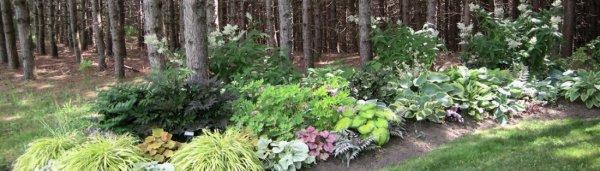 С какими растениями хорошо сочетается туя в дизайне сада