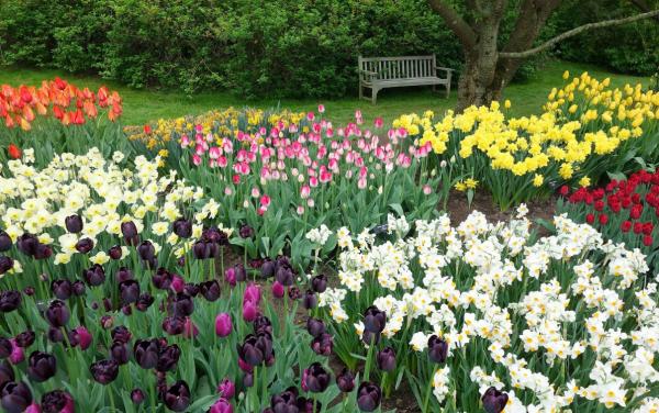 Что посадить рядом с тюльпанами