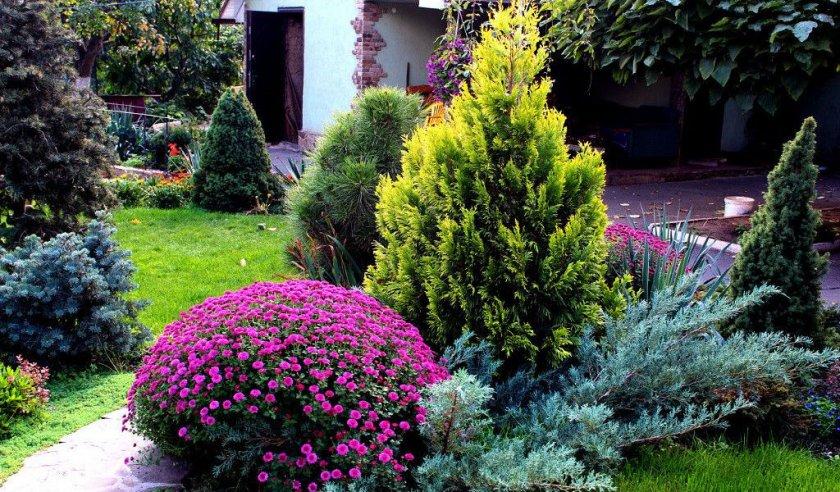 Растения рядом с туей