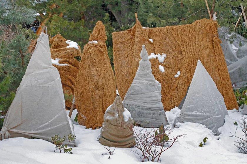 Подготовка дерева к зиме