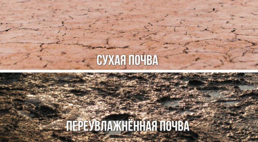 Сухая и переувлажнённая почва