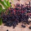Вино из черной бузины  польза и вред рецепты приготовления
