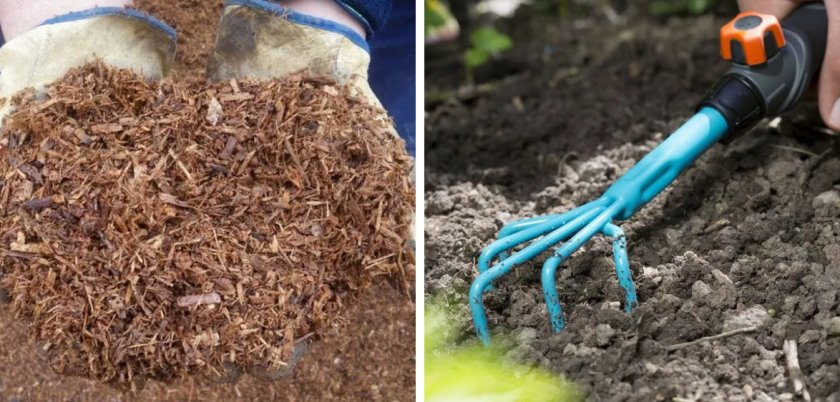 Мульчирование и рыхление почвы сосны