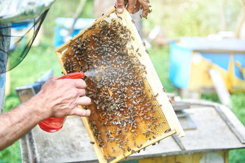 Обработка пчел пихтовым маслом