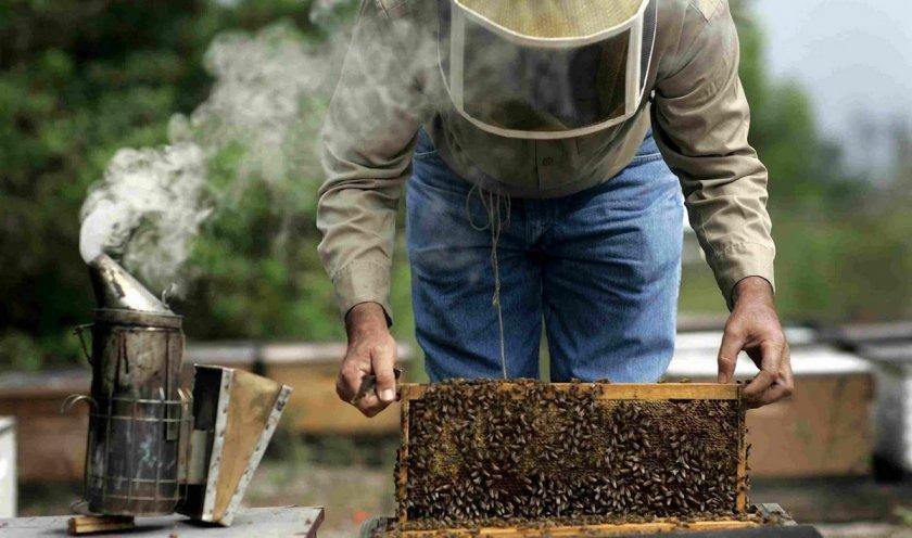 Уход за пчёлами