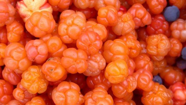 Ягода морошка: фото и описание, что это такое и где растёт, как выглядит и цветёт