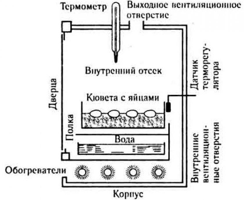 Чертёж вертикального инкубатора