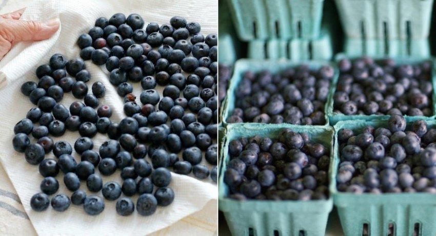 Хранение ягод черники