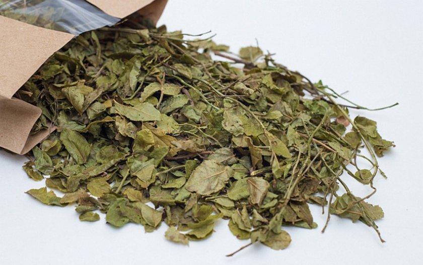 Хранение побегов и листьев черники