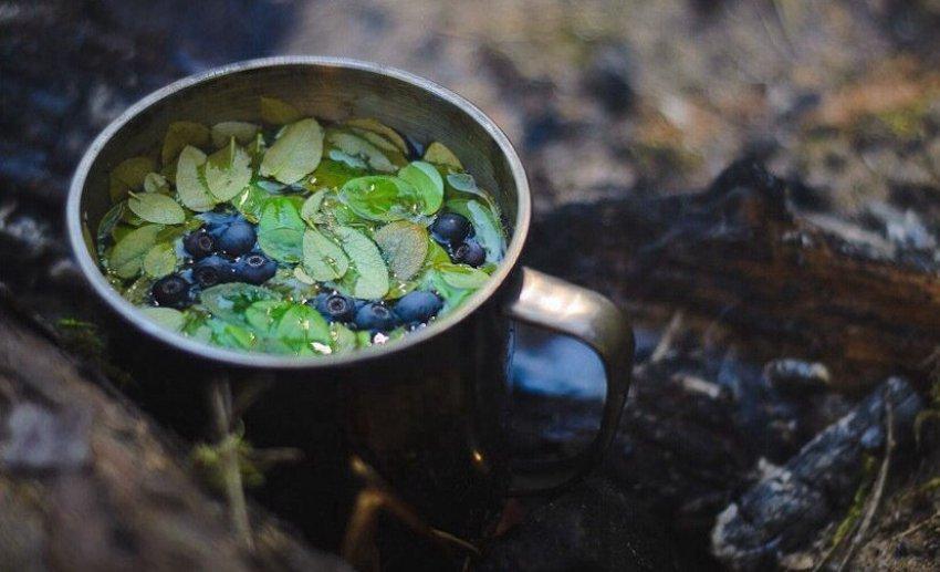 Чай из черничных листьев