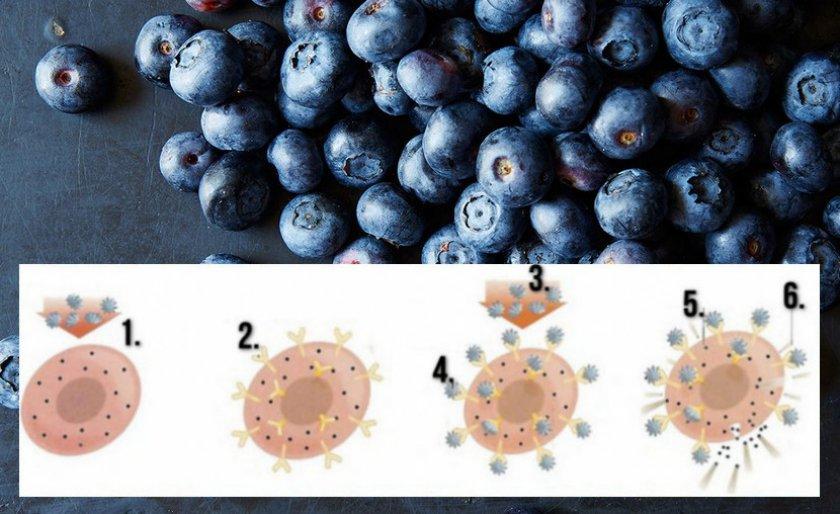 Схема действия аллергена