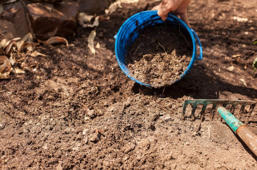 Подготовка грунта под посадку жасмина