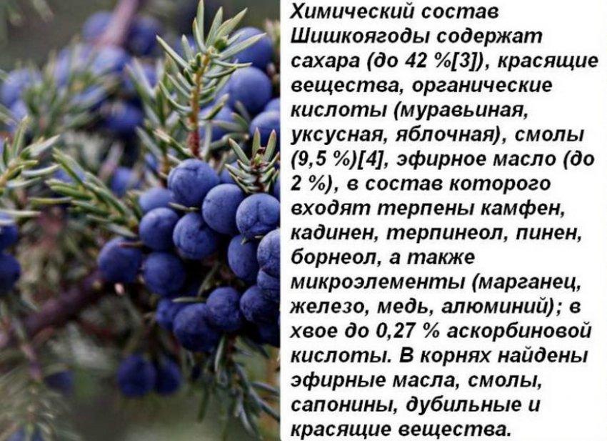 Состав ягод можжевельника