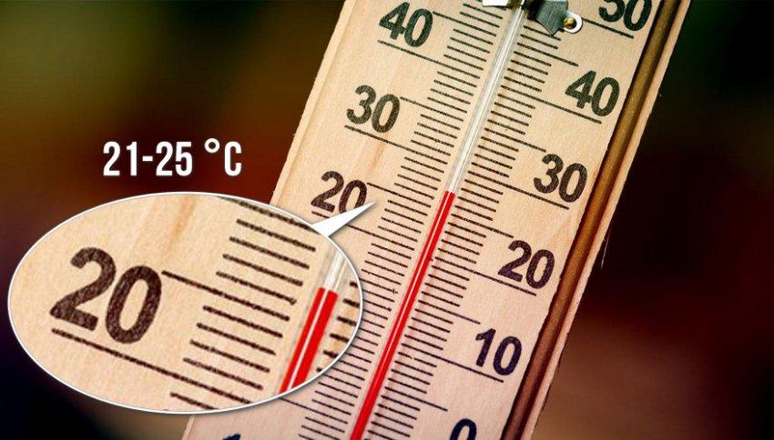 Температура для комнатного жасмина