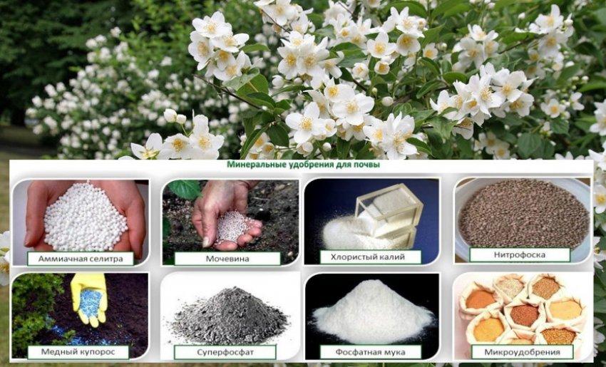 Минеральные удобрения для жасмина