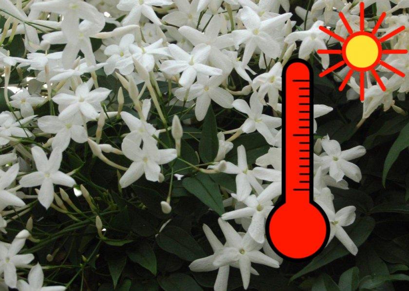 Оптимальная температура воздуха для выращивания