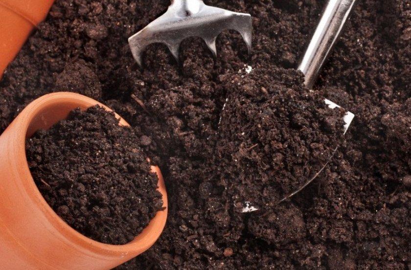 Подготовка почвы под посадку жасмина