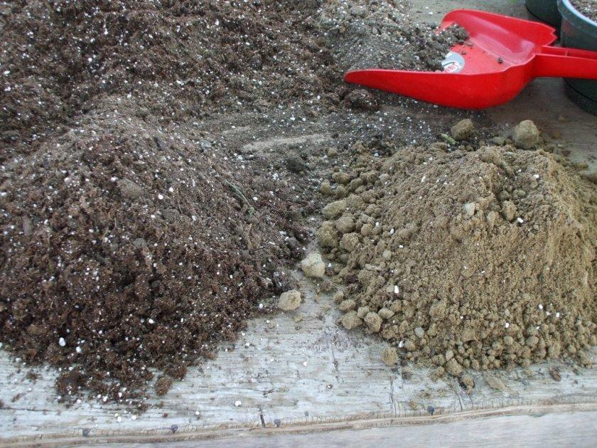 Почва для рассады тыквы