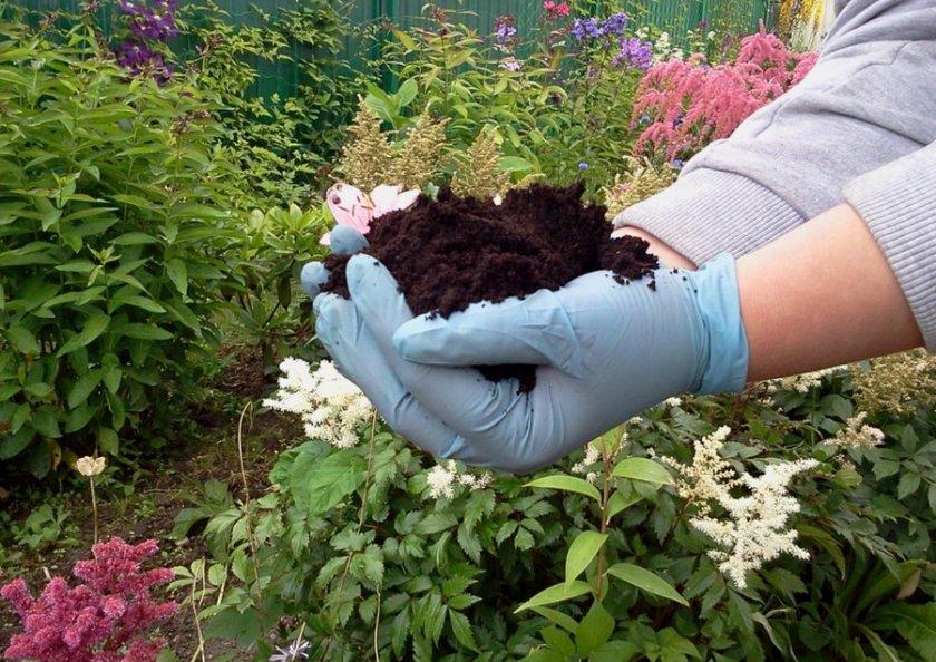 Почва для гортензии
