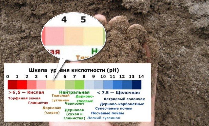 Почва для выращивания черники
