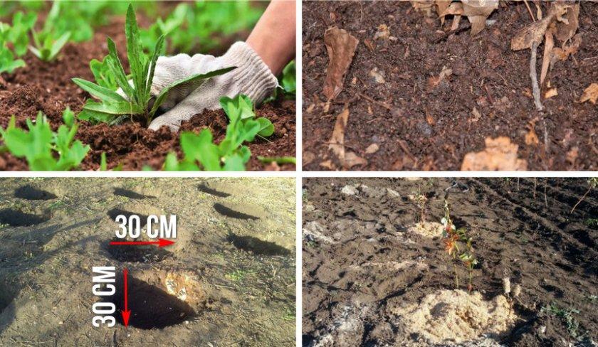 Создание искусственной почвы для черники