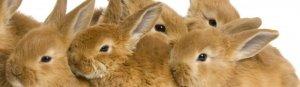 Разведение кроликов в ямах (метод вольного содержания): особенности, плюсы и минусы, идеи опытных кролиководов