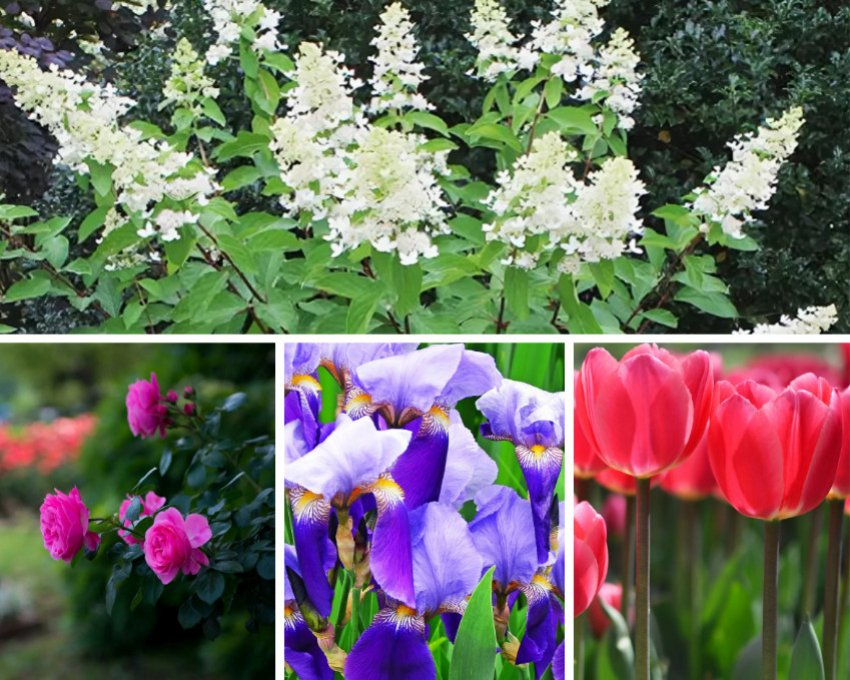 Гортензии и цветы ярких окрасов