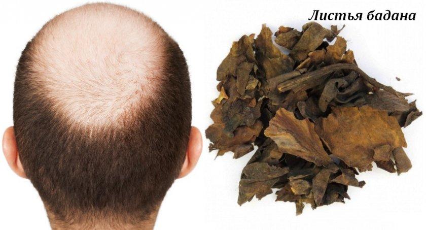 Чай из листьев бадана для мужчин
