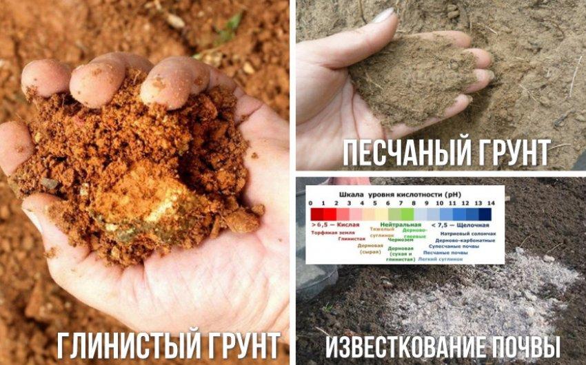 Почва для можжевельника