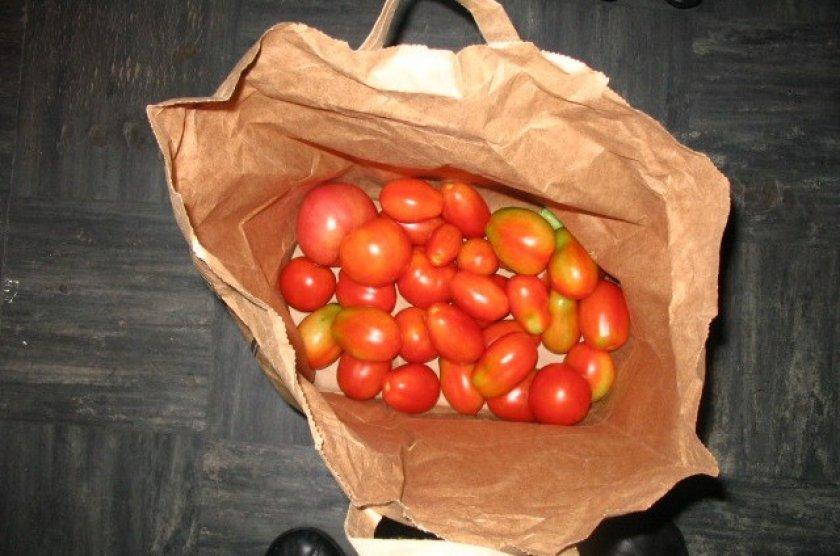 Хранение помидор в бумажном пакете