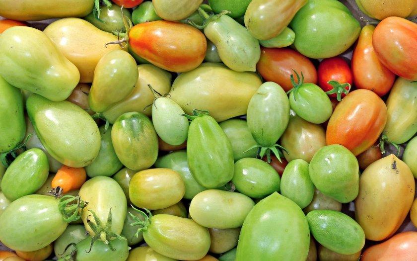 Хранение зелёных помидор