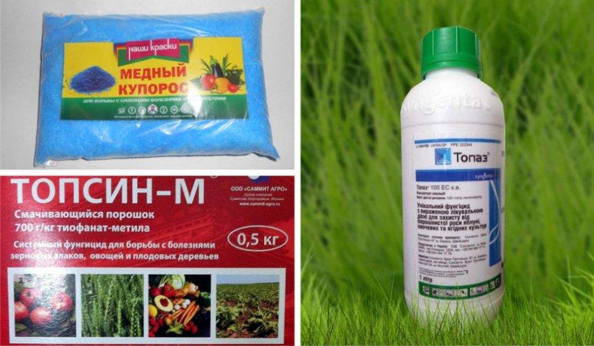 Препараты против мучнистой росы