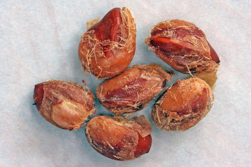Семена можжевельника