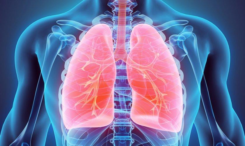 Можжевельник при болезнях органов дыхания