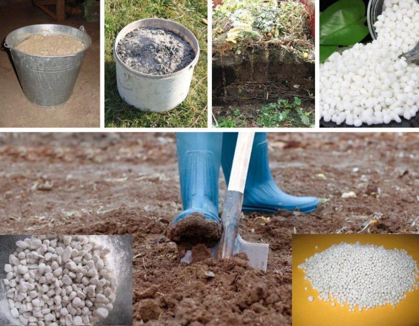 Подготовка почвы под посадку тюльпанов