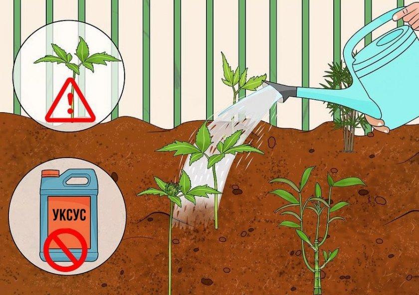 Подкисление почвы уксусом
