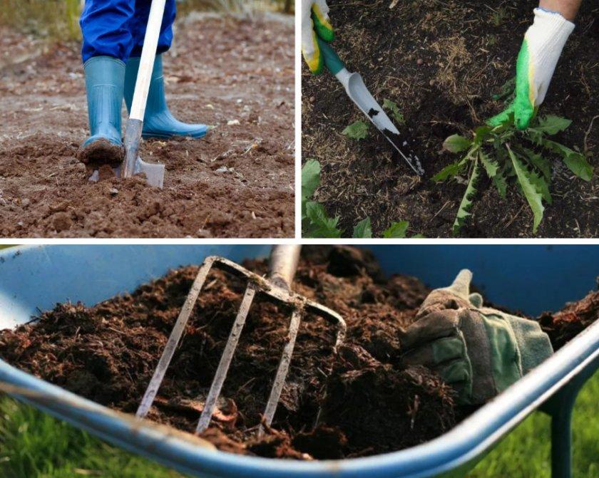 Подготовка почвы для посадки рододендрона