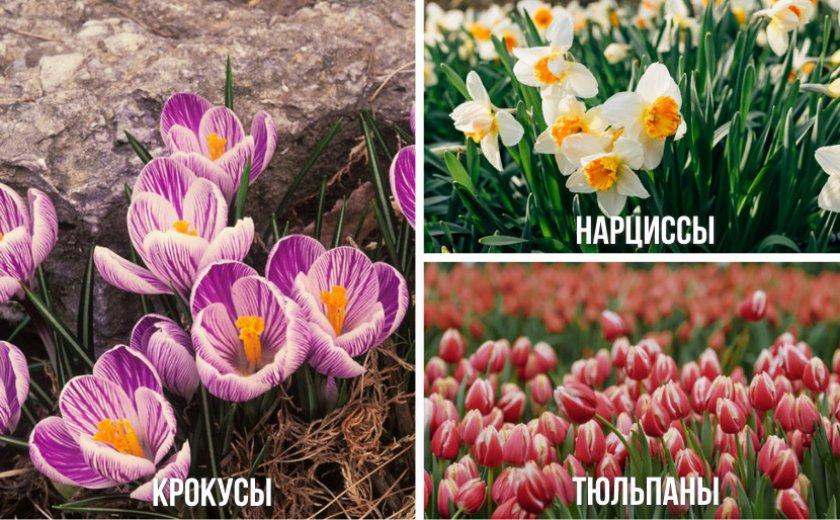Цветы, высаживаемые вместе с гиацинтами
