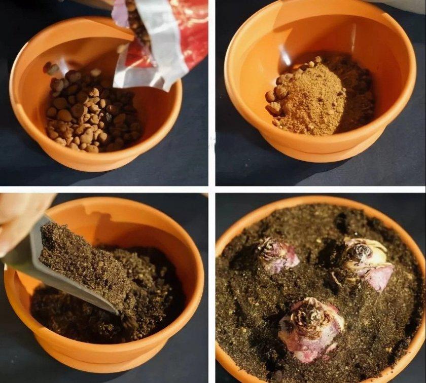 Посадка луковиц гиацинтов