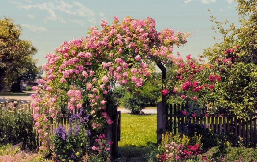 Арка из роз в дизайне участка