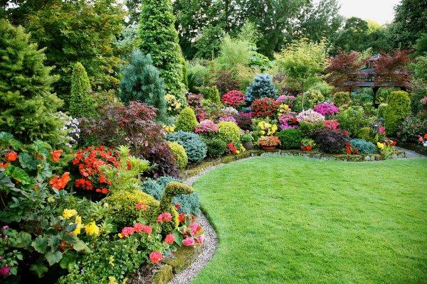 Растения используемые в ландшафтном дизайне