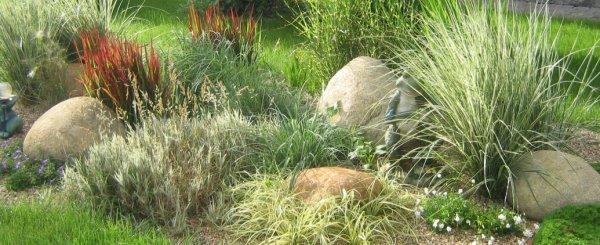 Сизая трава на клумбах