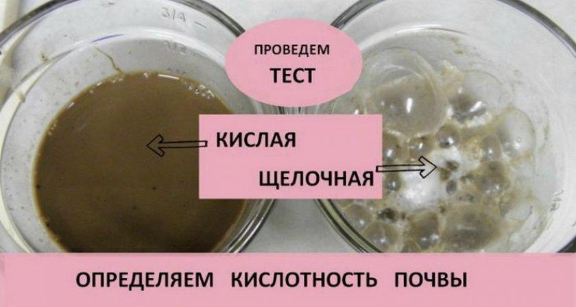 Тест на кислотность почвы