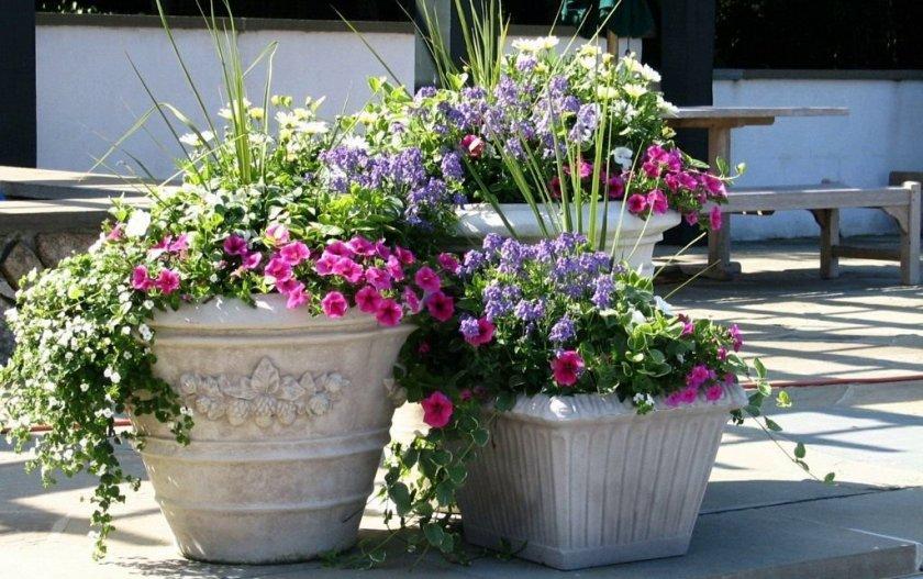 Цветы в бетонных горшках