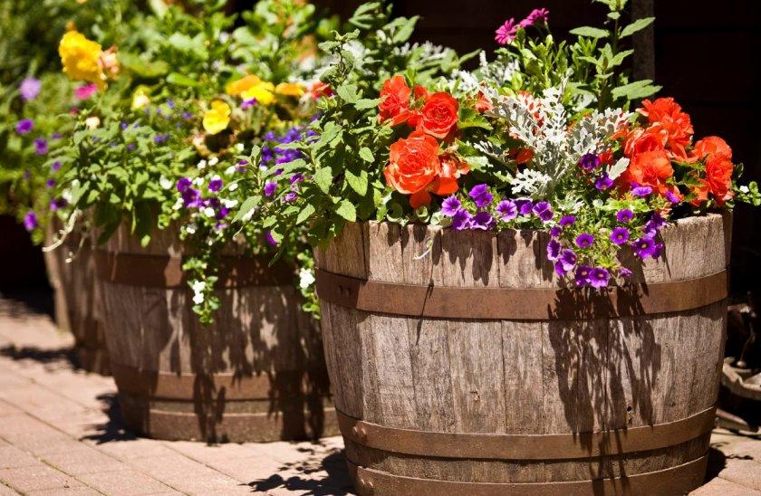 Цветы в деревянных горшках