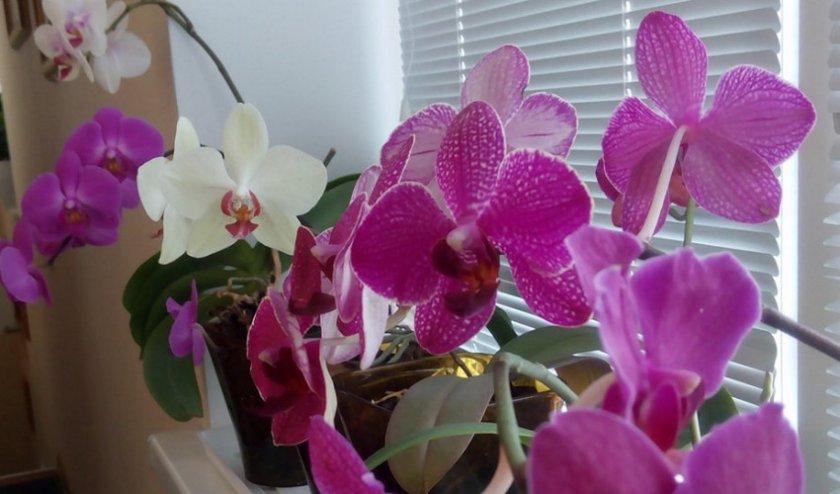 Орхидеи из семян