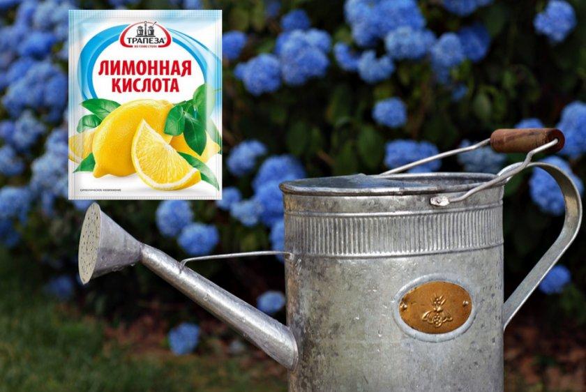 Лимонная кислота для гортензии