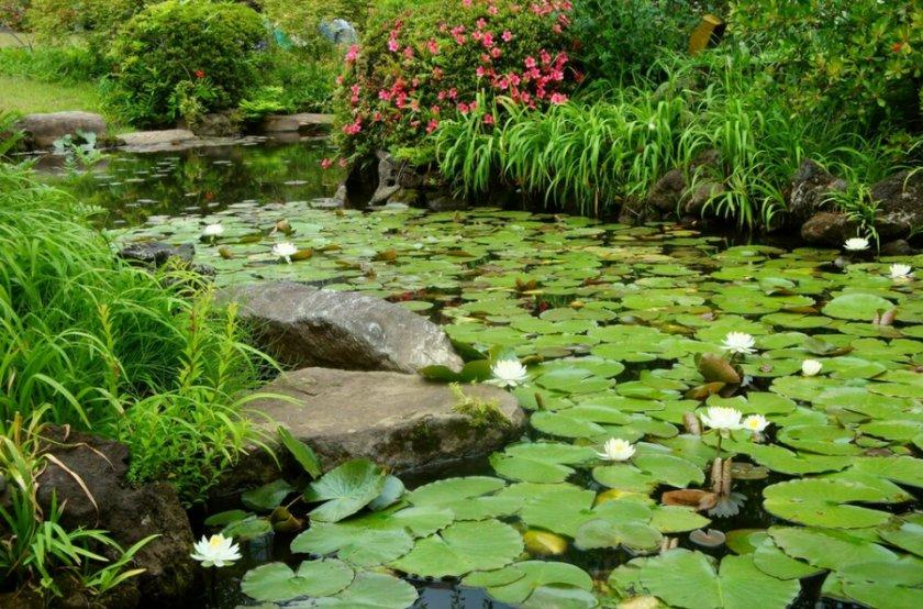 Декоративное болото